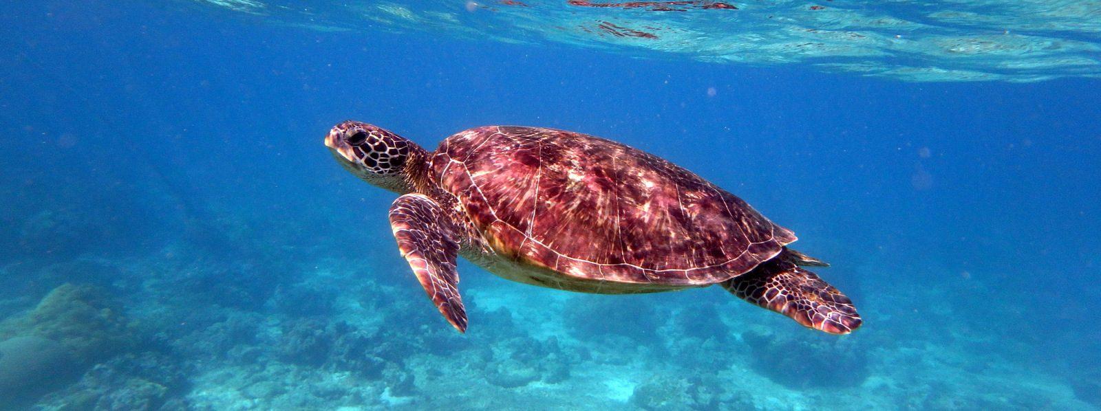 Filipini pod vodo