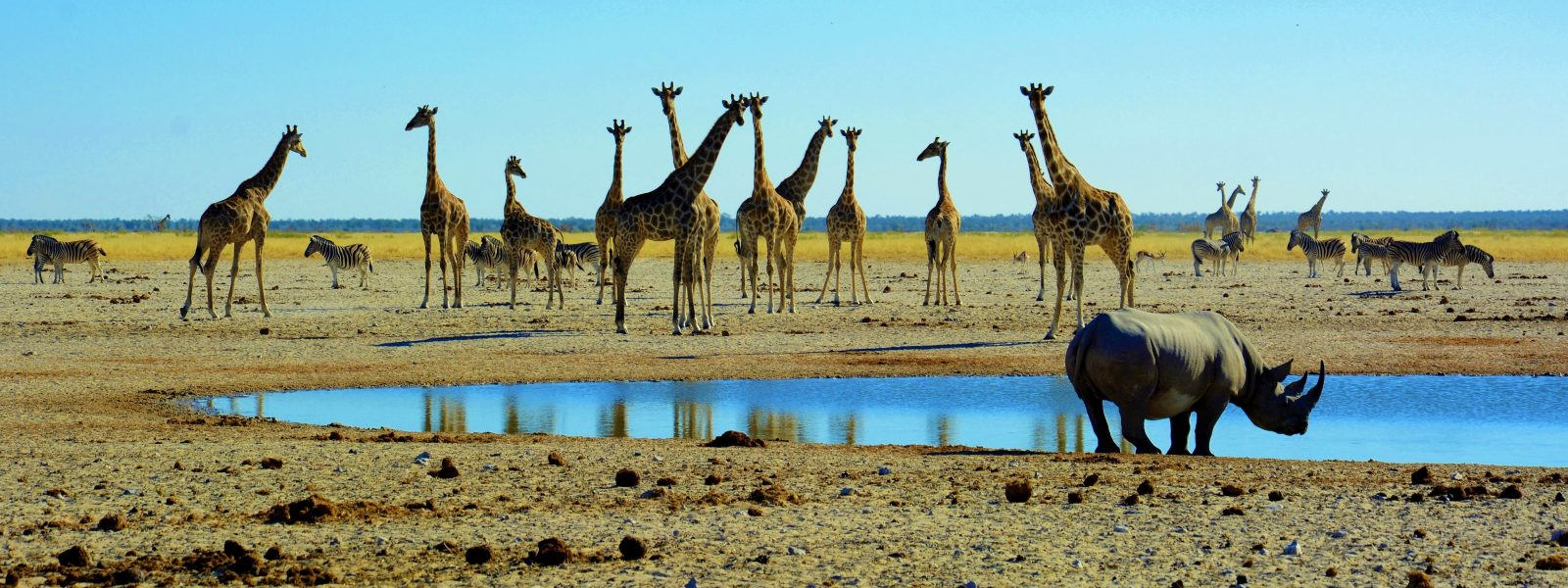 Etosha NP – sanjski afriški safari