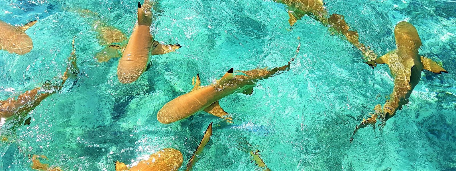 50 odtenkov modrine v laguni Bora Bore