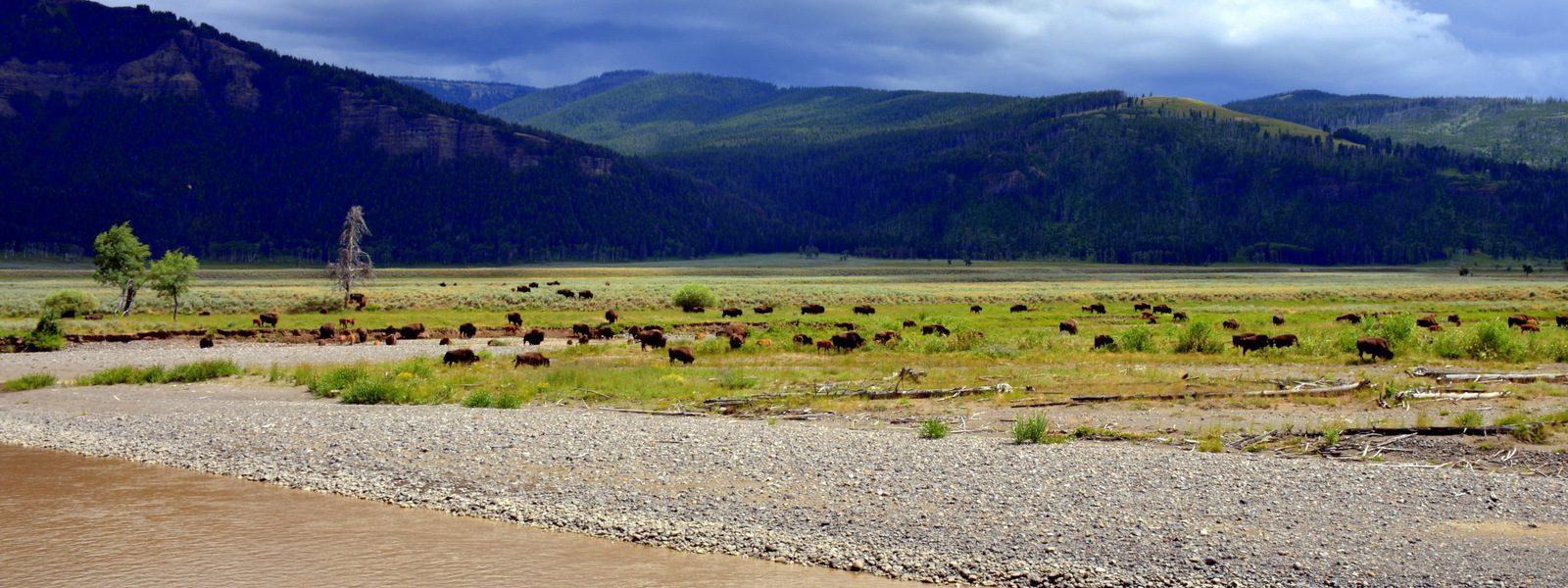 Naš izbor: 5 razlogov, zakaj morate vsaj enkrat v življenju obiskati Yellowstone – najstarejši nacionalni park na svetu
