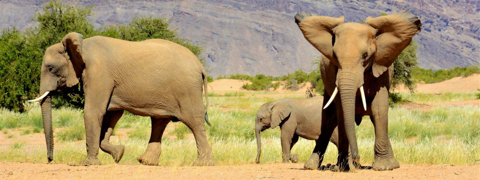 Naš izbor: 5 razlogov, zakaj sodi Namibija med najbolj fotogenične dežele sveta